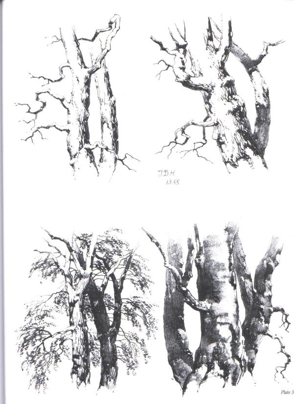 《树与自然风景的绘画—经典维多利亚风格实例教程》